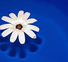 Flower On Blue #1 by Eduard Gorobets