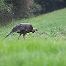 Turkey in The Rain by Lori Walton