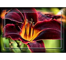 Nature's Artistry Photographic Print
