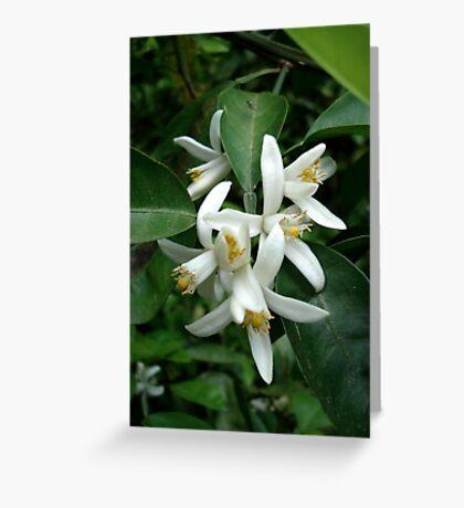 Orange Blossom Special Greeting Card