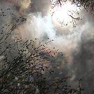 lucy in the sky by gabryshak