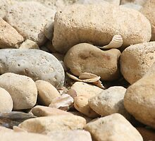 Pebbles by Pamela Jayne Smith