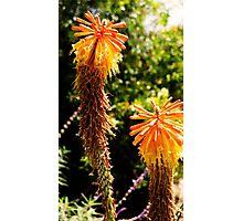 Yellow desert flower Photographic Print