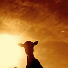 A Goats life by EricAnderson