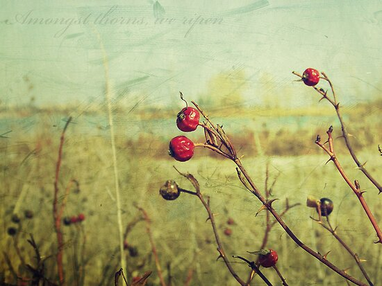 Amongst thorns, we ripen : Featured Work by Th3rd World Order