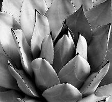 Cactus by andBlanc