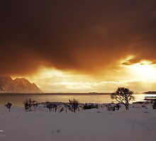 Arctic Days by Andreas Stridsberg