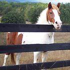 Mountain Pony by Ginny York