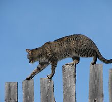 Tabby on Fence Ridge Walker  Series # 1 by Andrielle