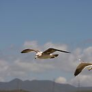 Seagulls Flying in Tandem by Buckwhite