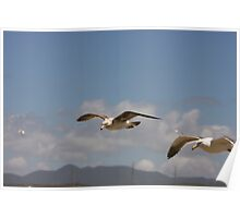 Seagulls Flying in Tandem Poster
