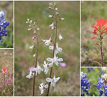 Texas Wildflowers by jujubean