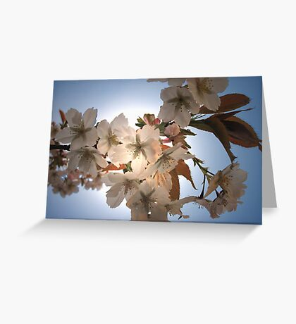 Cherries in the Light Greeting Card