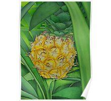 Miniature Pineapple Poster