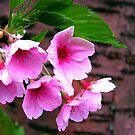 Sarehole Mill Blossom by Mark Wilson