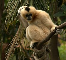 Monkey in a tree. by elphonline