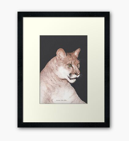 The Majestic Mountain Lion Framed Print