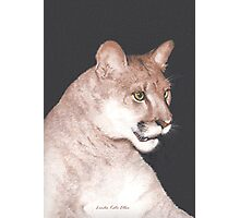 The Majestic Mountain Lion Photographic Print