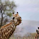 ARE YOU TALKING TO ME ....? by Magriet Meintjes