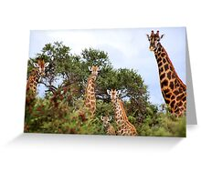 THE  FAMILY GATHERING  - GIRAFFE – Giraffa camelopardalis Greeting Card
