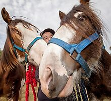 Clydesdales 02 by Yanni