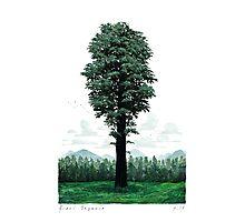 Giant Sequoia Portrait Photographic Print