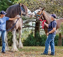 Clydesdales 05 by Yanni
