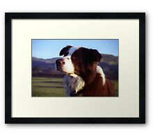 Red of Llanfairfechan Framed Print