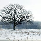The Tree In Winter 2 by photographyjen