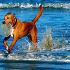 Dog, Frisbee and the beach and the waves of the OCEAN by kellimays