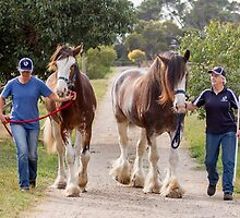 Clydesdales 10 by Yanni