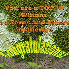 Banner - Top 10 Winner in Challenge - Ferns and Mosses Group - Not for Sale by MotherNature