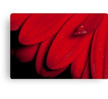 Red Gerbera Detail Canvas Print