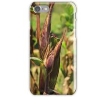 Stalk of Corn iPhone Case/Skin
