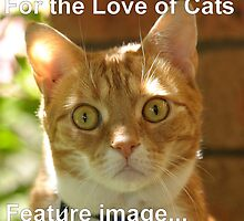 Angus - For the Love of Cats - Feature image by Andrew Trevor-Jones