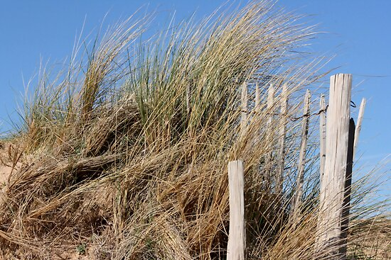 The Dunes by Pamela Jayne Smith