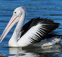 Beauty in motion = The Pelican by JayWolfImages