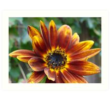 Autum Sunflower Art Print