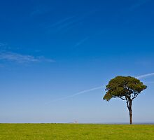 lonely tree in paddock by marko1953