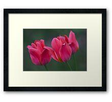 Dwarf Tulips Framed Print