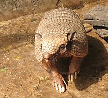 Six-banded armadillo by anibubble