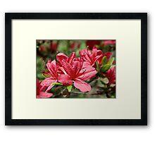 Beautiful Ladies of Spring Framed Print