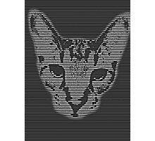 Abstract Cat Face Photographic Print