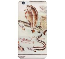 Rumbo Rhymes, or, The Great Combine a Satire by Alfred Calmour illustrated by Walter Crane 79 - With Soulful Sigh he thus Began iPhone Case/Skin