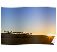 Tree lined sunset Poster