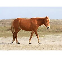 Blonde mustang on Shackleford Banks, North Carolina Photographic Print