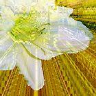 Gilding the lily by Susan Elizabeth Dalton