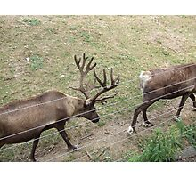 Canadian Elks In Procession Photographic Print