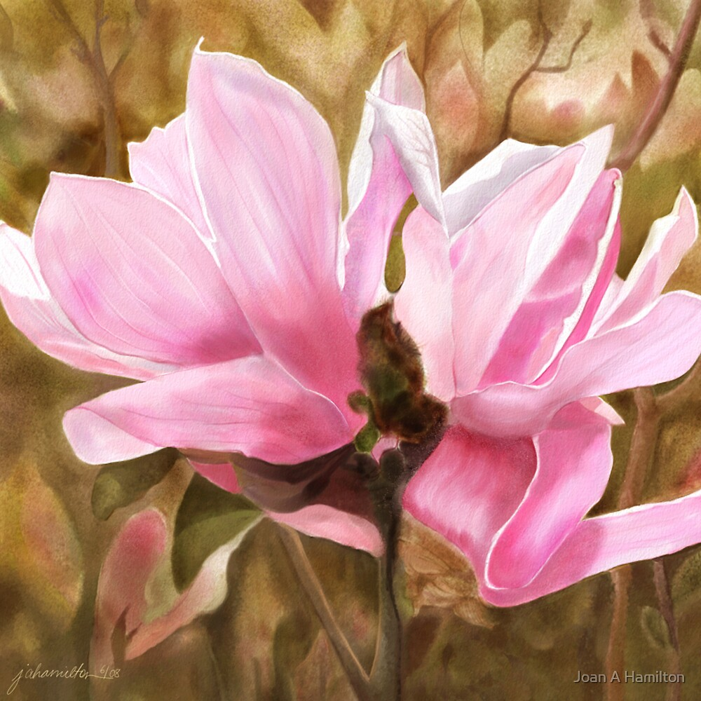 Pink Magnolia Two by Joan A Hamilton