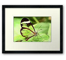 Transparent Butterfly Framed Print